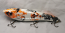 "Pearson Plug 8"" Trophy Hunter Color, Koi"